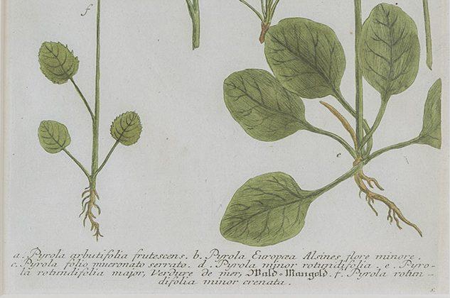 WEINMANN, Johann Willelm (Prints)
