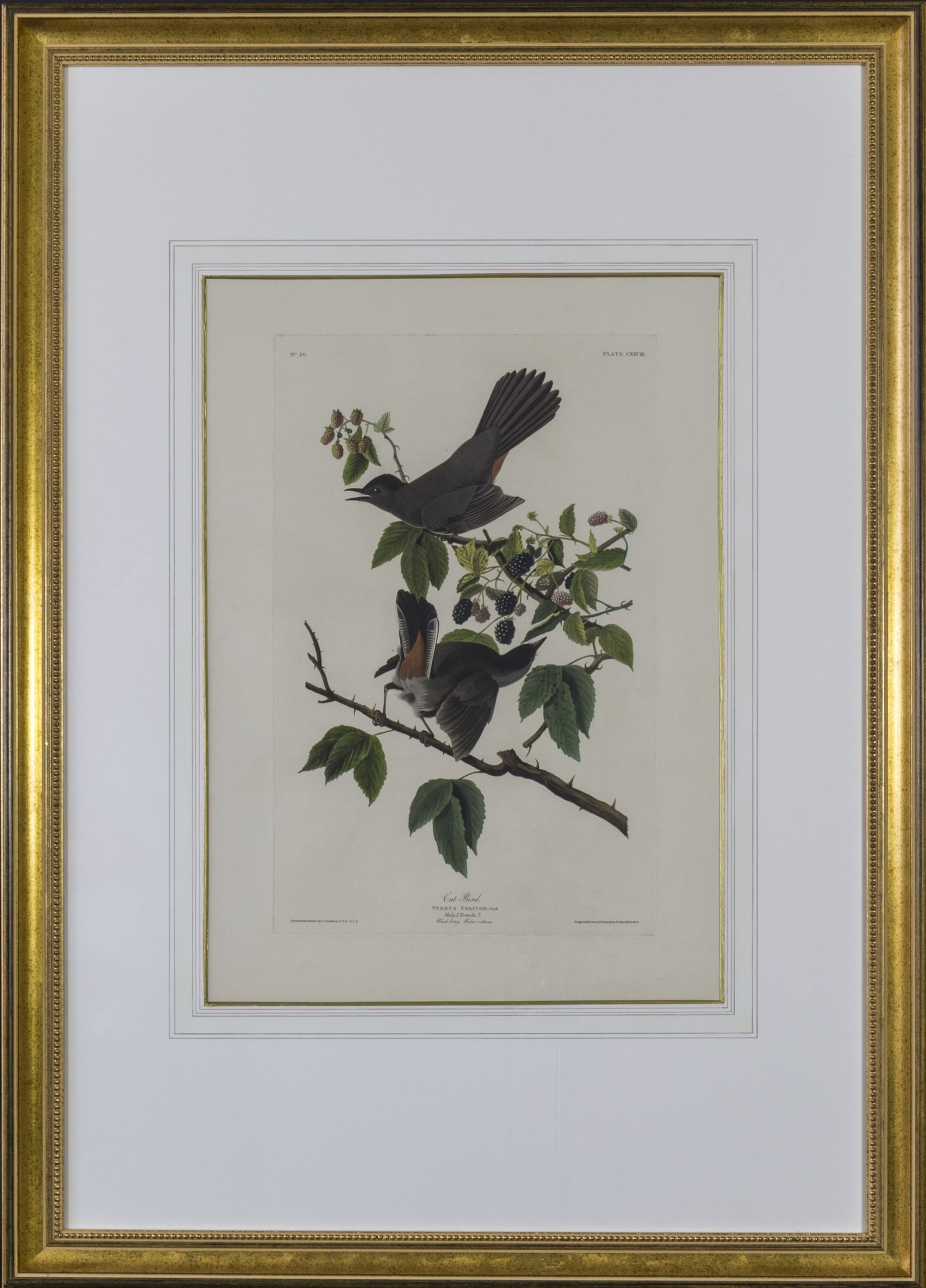 AUDUBON, John James (Print)