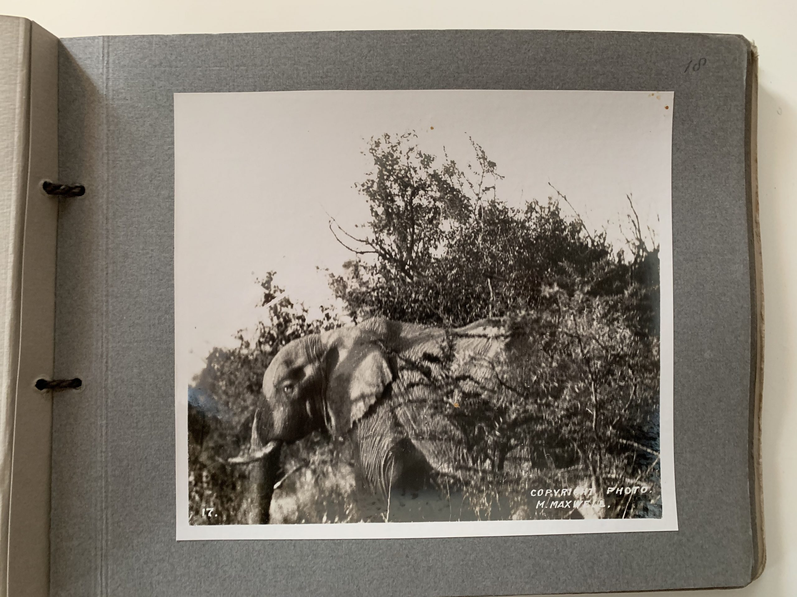 Photographic Album of Africa